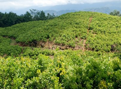 Ceylon Cinnamon growing areas in Sri Lanka