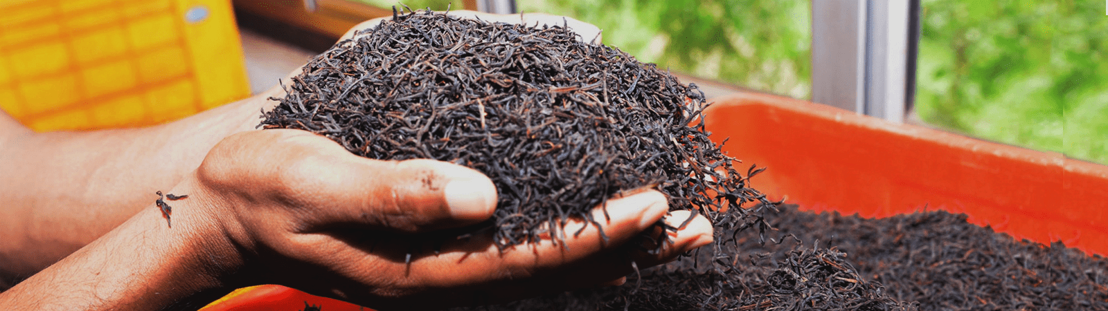 pure-Ceylon-black-tea